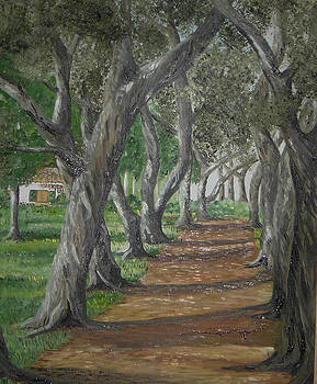Olive Trees by Anna Witkowska