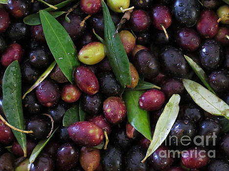 Olives by Laurie Morgan