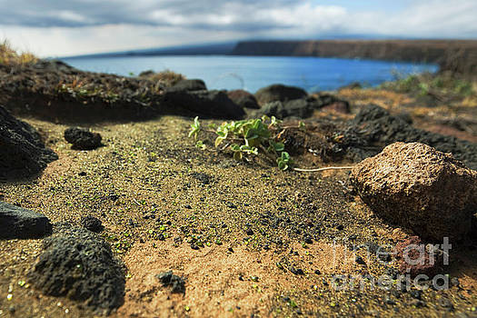 Charmian Vistaunet - Olivine Crystals - South Point Big Island