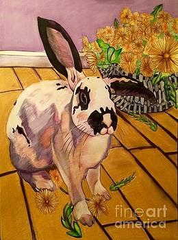 Ollie by Tiffany Brazell