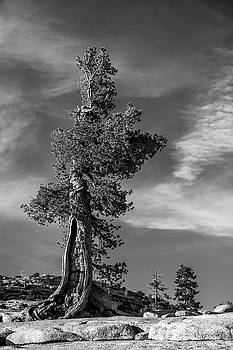 Olmsted point pine by Davorin Mance
