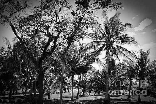Olowalu Palms Maui Hawaii by Sharon Mau