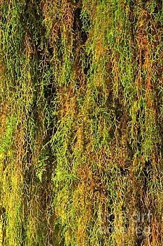 Adam Jewell - Olympic Moss Abstract