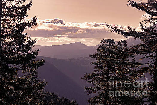 Olympic Mountains at Sunrise Framed by Pine Trees by Brandon Alms