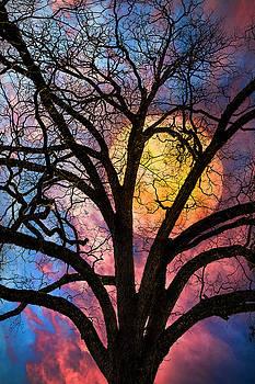 On a Moonlit Night by Debra and Dave Vanderlaan