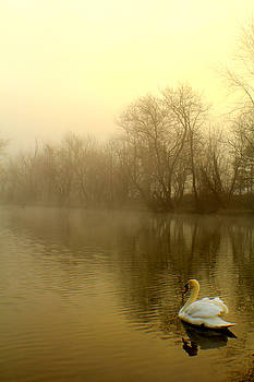 On golden pond by Doug Hoover