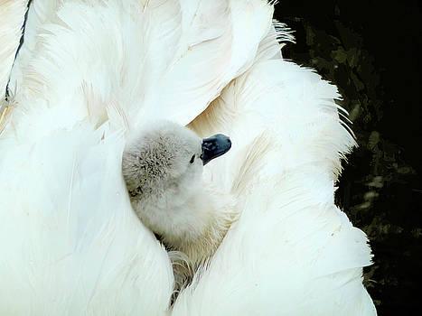 On gossamer wings by Valerie Anne Kelly
