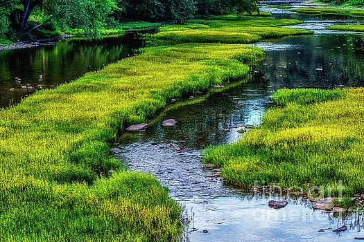On Greenbrier River by Thomas R Fletcher