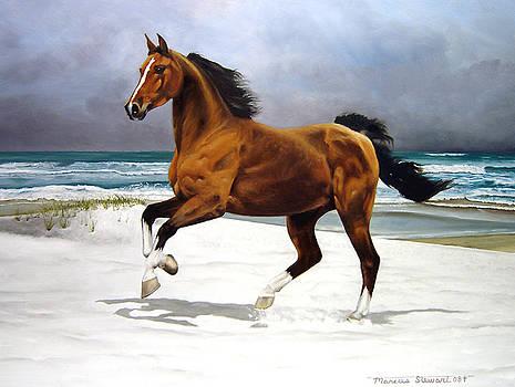 On The Beach by Marc Stewart