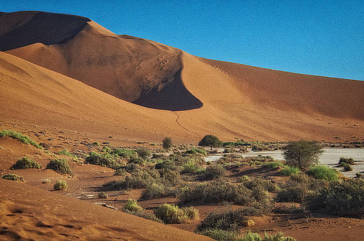On the Dunes by Sandy Schepis