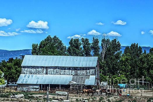 On the Farm by Billie-Jo Miller