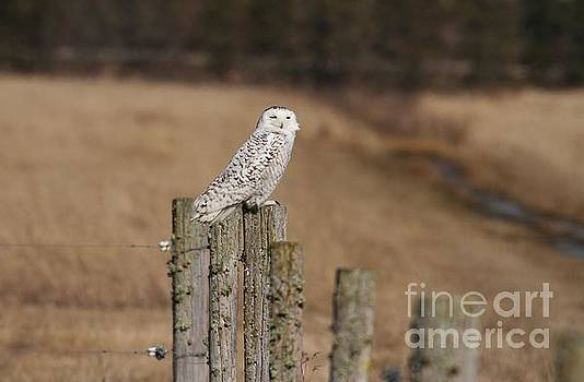 On the Fence by Teresa McGill
