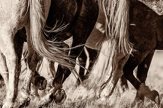 On the Move by Mary Hone