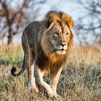 On the Prowl by George Salter