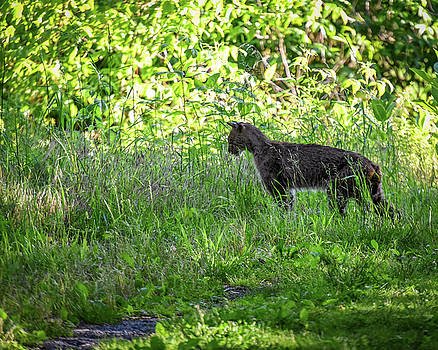 On the Prowl by Jeremy Clinard