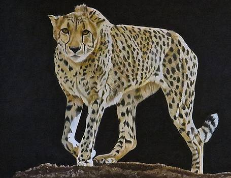 On the Prowl by Michelle McAdams