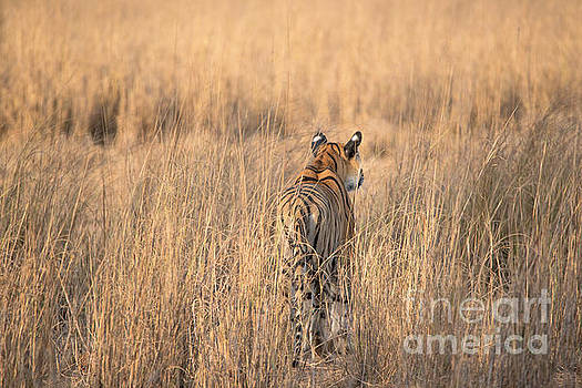 On the Prowl by Pravine Chester