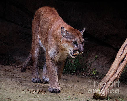 On The Prowl by TN Fairey