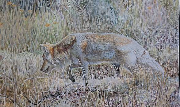 On the Prowl by Vera Rodgers