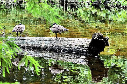 On the River Log by Kim Bemis
