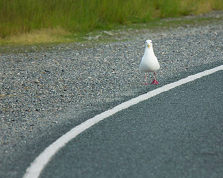 On The Road by Bob Stevens