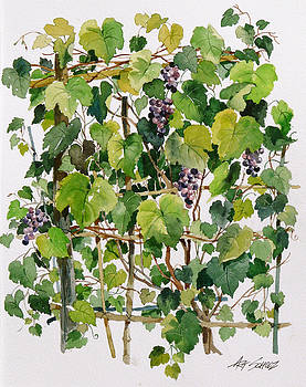 On The Vine by Art Scholz