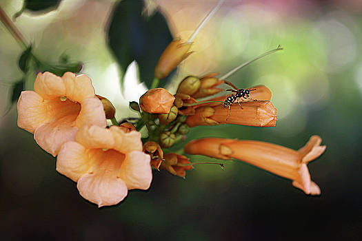 On Top of a Trumpet Vine by Vanessa Thomas