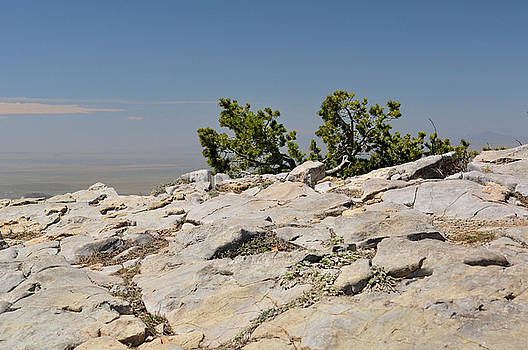 On Top of Sandia Mountain by Ron Cline
