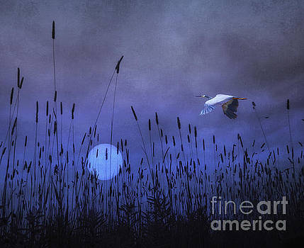 Once In A Blue Moon by Tom York Images