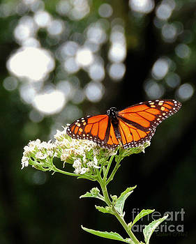 Once Upon A Butterfly 004 by Robert ONeil