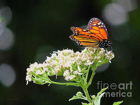 Once Upon A Butterfly 005 by Robert ONeil