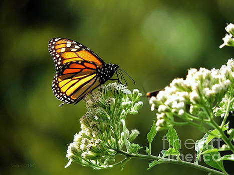 Once Upon A Butterfly 007 by Robert ONeil