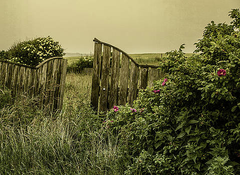 Once Was A Garden by Odd Jeppesen