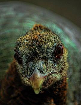 Dale Kauzlaric - One Beautiful Hen
