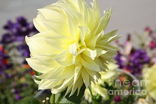 Chuck Kuhn - One Beauty Flower