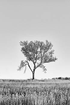 One by David Oakill
