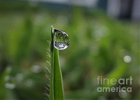 One Drop by Dee Winslow