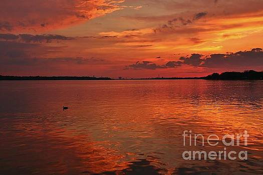One Ducky Reflective Sunset on the Niagara River by Tony Lee