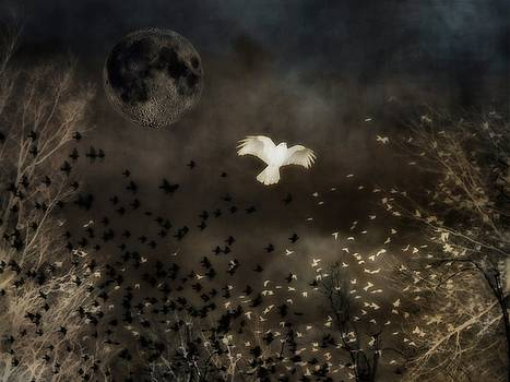 Gothicrow Images - Chaotic Night Flight Of The Birds