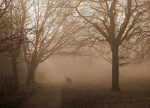 One Foggy Morning by Judi Saunders