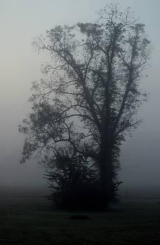 One Foggy Morning by Karen Harrison