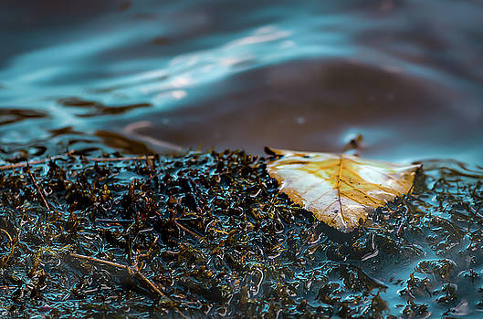 One Leaf by Ant Pruitt