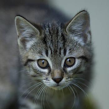 One little Kitten by Jana Goode