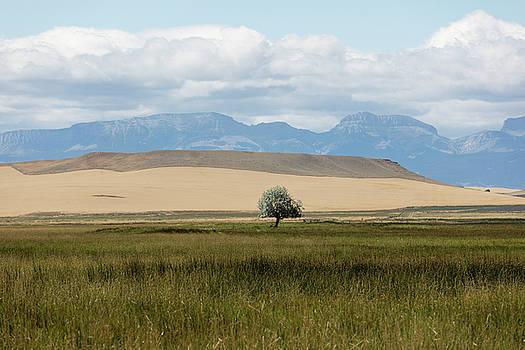 One Lone Tree Montana  by John McGraw