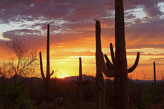 One Night In Tucson by Ryan Seek