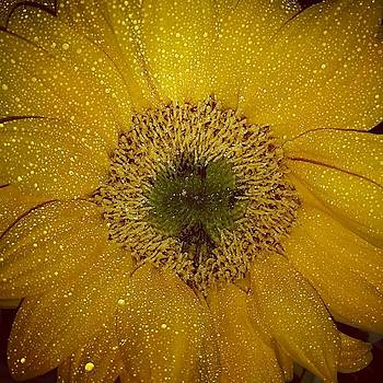 One Of The Sunflowers From My Amazing by Heather Tyndall