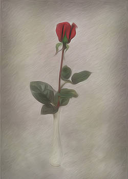 One Red Rose by Cecil Fuselier