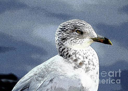 One Seagull by Linda Joyce