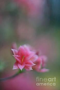 Mike Reid - One Tiny Blossom