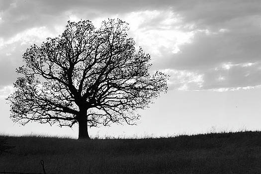 One Tree on a Hill by Vonda Barnett
